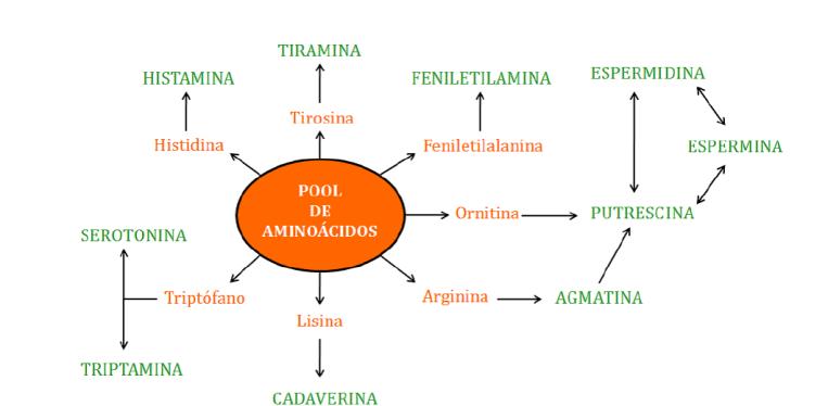 Aminoácidos precursores de aminas biógenas
