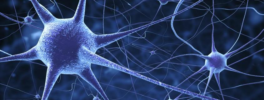 ¿Cuántas células tiene el cerebro?