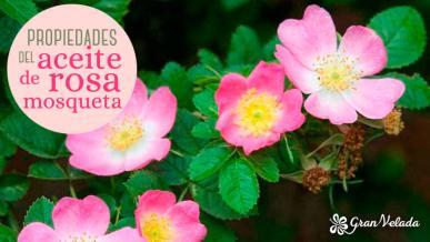 Detalle del Escaramujo de Rosa Mosqueta