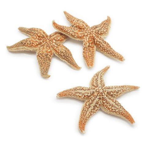 Estrella erizada