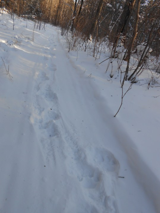 Logging trails