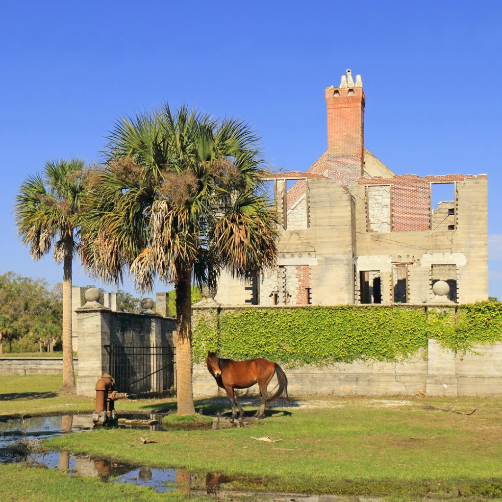 a wild horse near the ruins on Cumberland Island