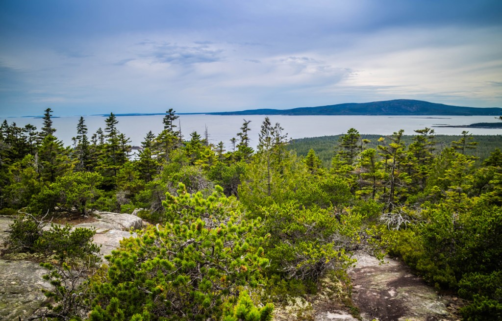 trees and shrubbery atop schoodic head point looking out at the ocean