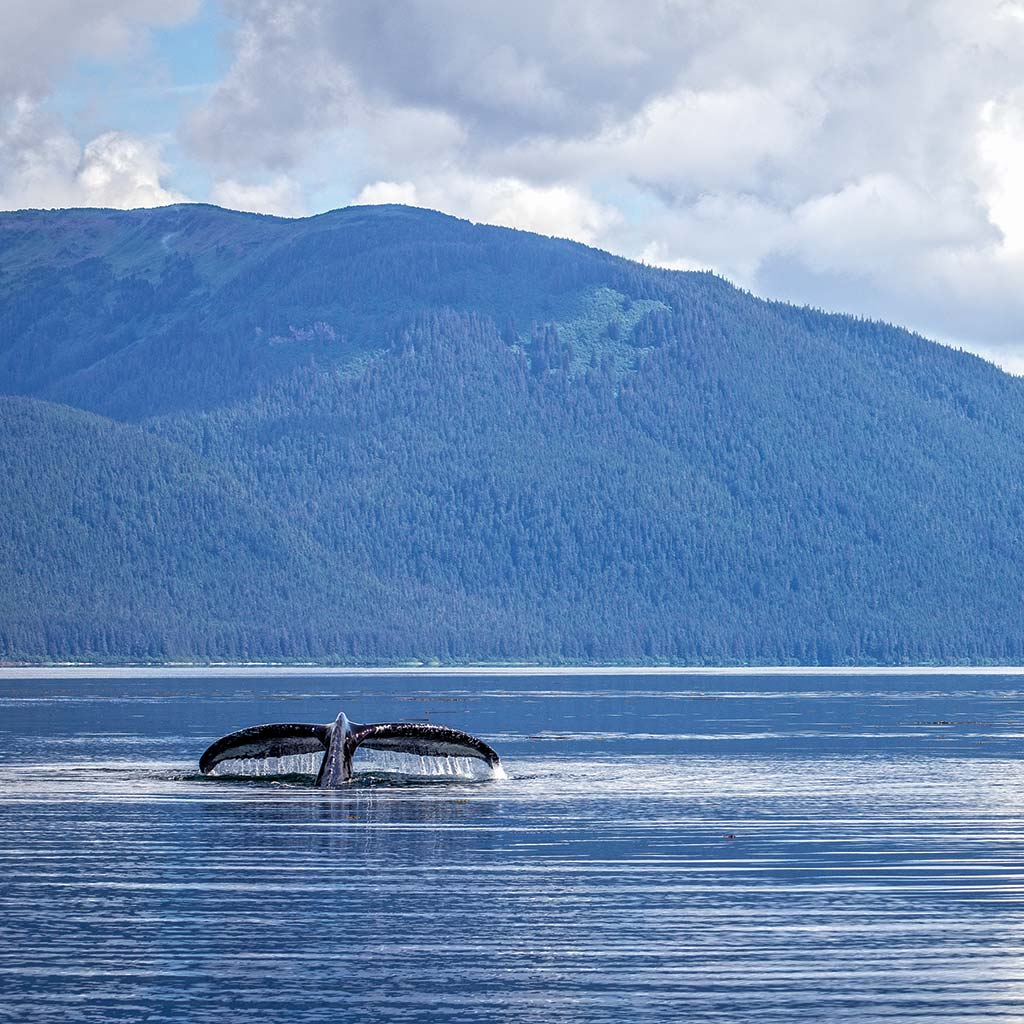 Whale tail peeks above the water in Alaska