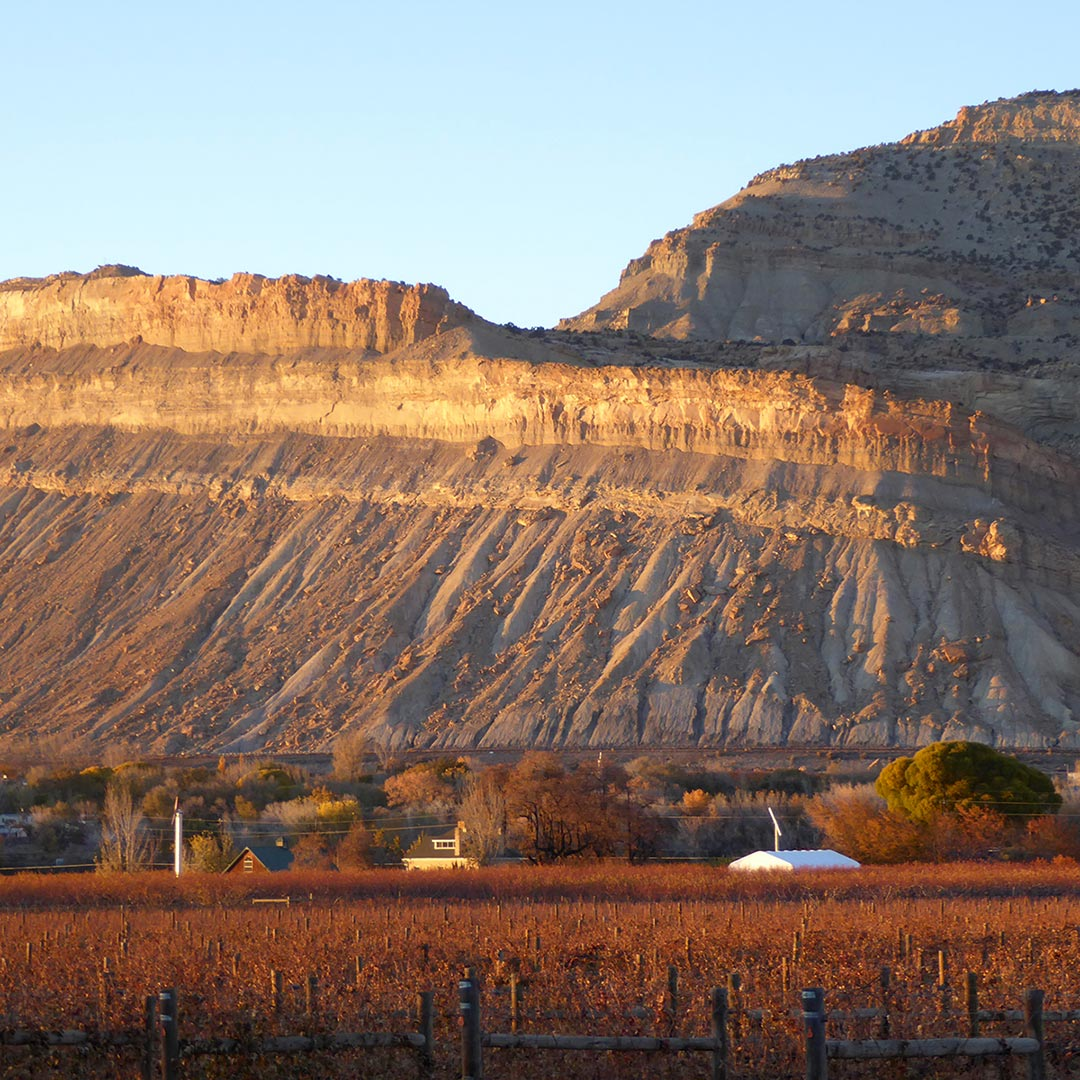 sunset over the vineyards of Grand Junction