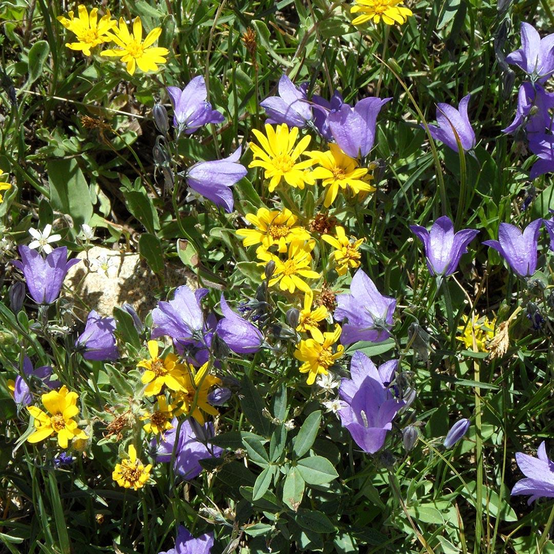 yellow and purple wildflowers