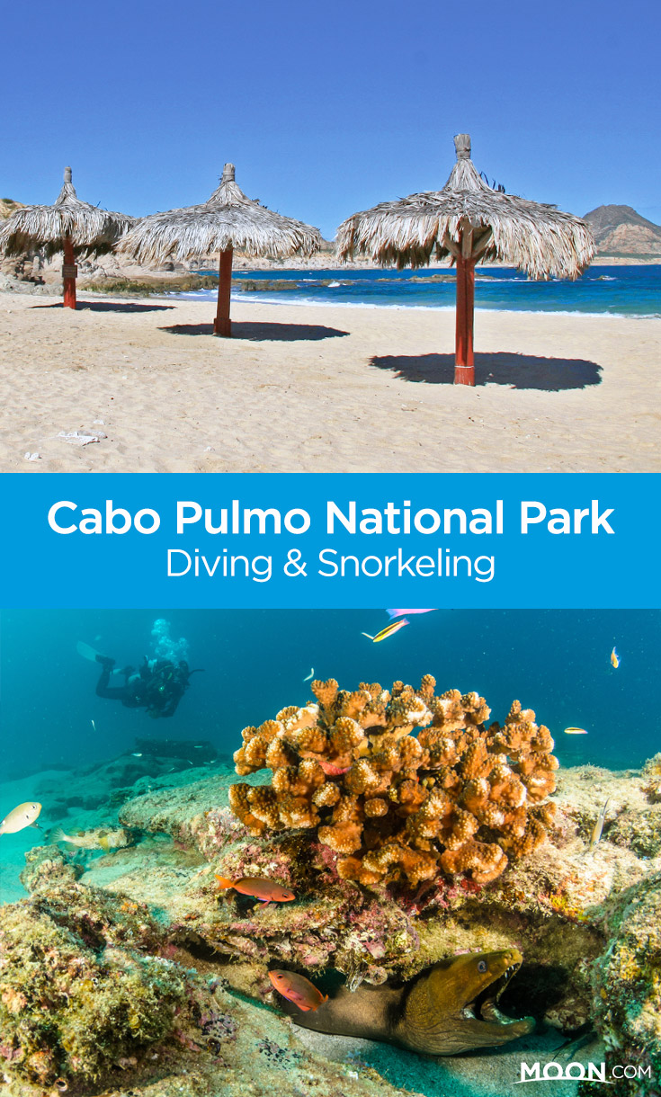 If you're headed to Los Cabos, Mexico, pay a visit to Cabo Pulmo National Park for excellent diving and snorkeling opportunities. Author Jennifer Kramer guides you to the best beaches and outfitters in the area so that you can experience the beautiful living reef in the Sea of Cortez.