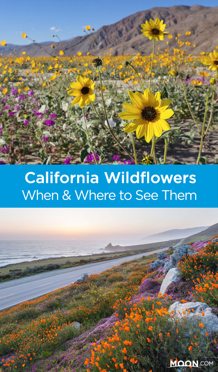 Whether you plan a trip to the desert, to the coast, or to the mountains, as a first time visitor or seasoned native, the natural beauty of the Golden State is sure to dazzle you. Find out when and where to see California wildflower displays in some of the state's most beautiful parks this year.