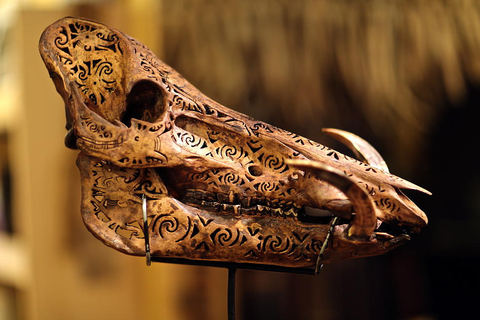 A boar skull carved with cut out patterns in Dayak tradition.