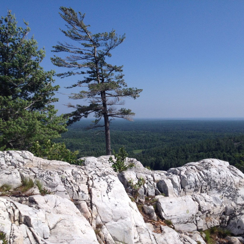 Trees sit atop a rocky mountain with the Killarney Provincial Park landscape and sky in the background