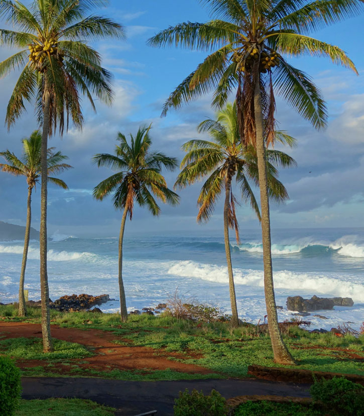 Palm trees front a shorline with white frothy waves.