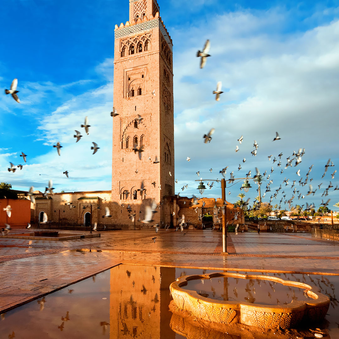 birds flock around the Koutoubia Mosque in Morocco Marrakesh