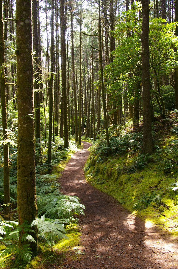 A path snakes through a lush forest in Oregon's Washburne State Park.