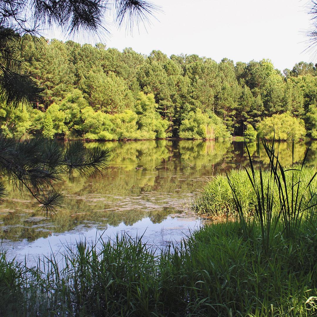 lush flora surrounding Carolina Bay in Aiken South Carolina