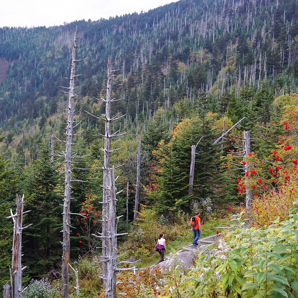 Approaching Clingmans Dome on the trail from Andrews Bald
