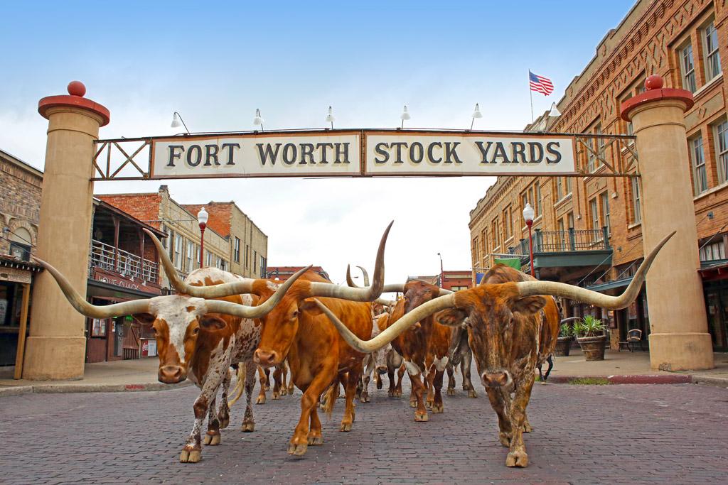 longhorn bulls under the Fort Worth Stockyards sign