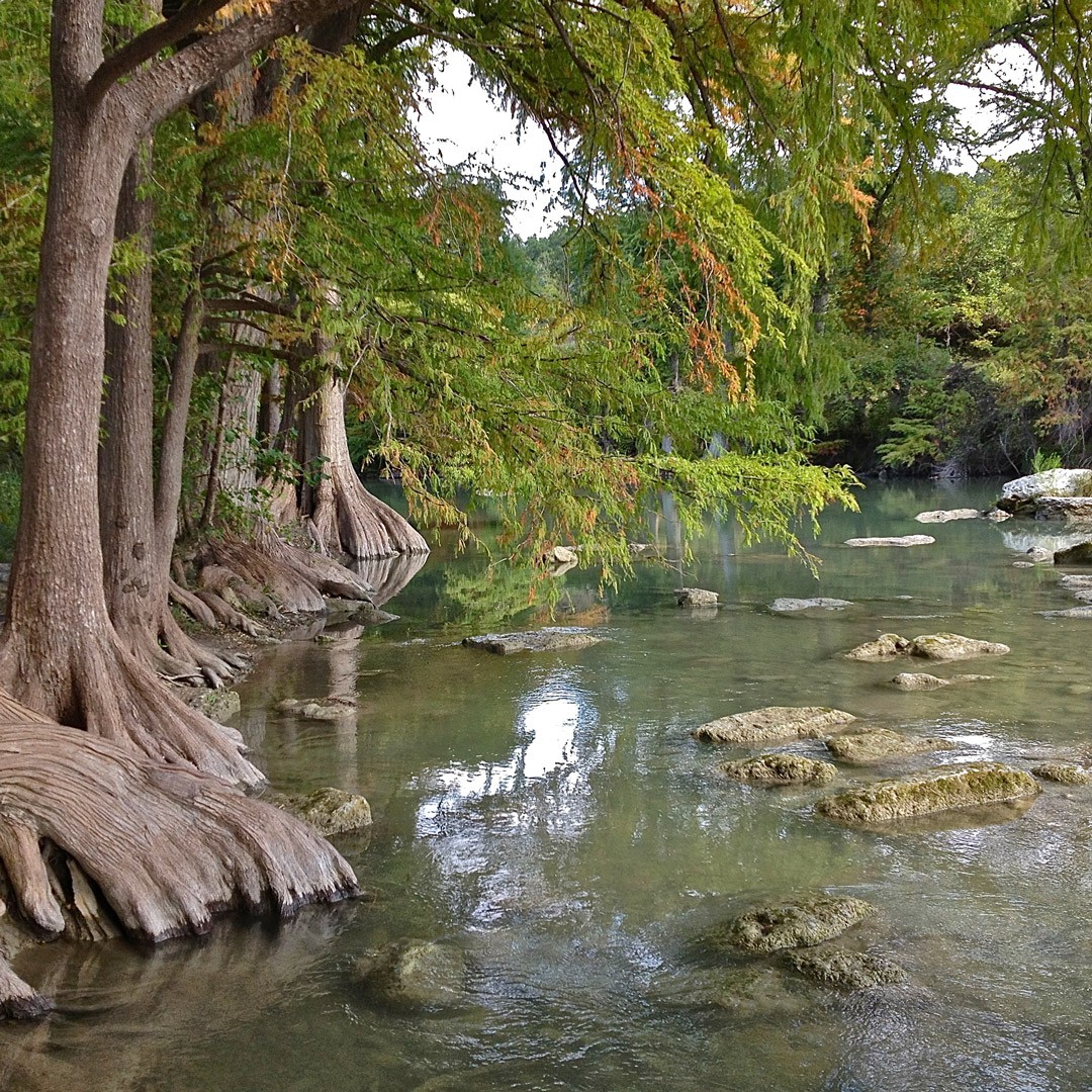 trees and other greenery line the shores of the Guadalupe River in Texas