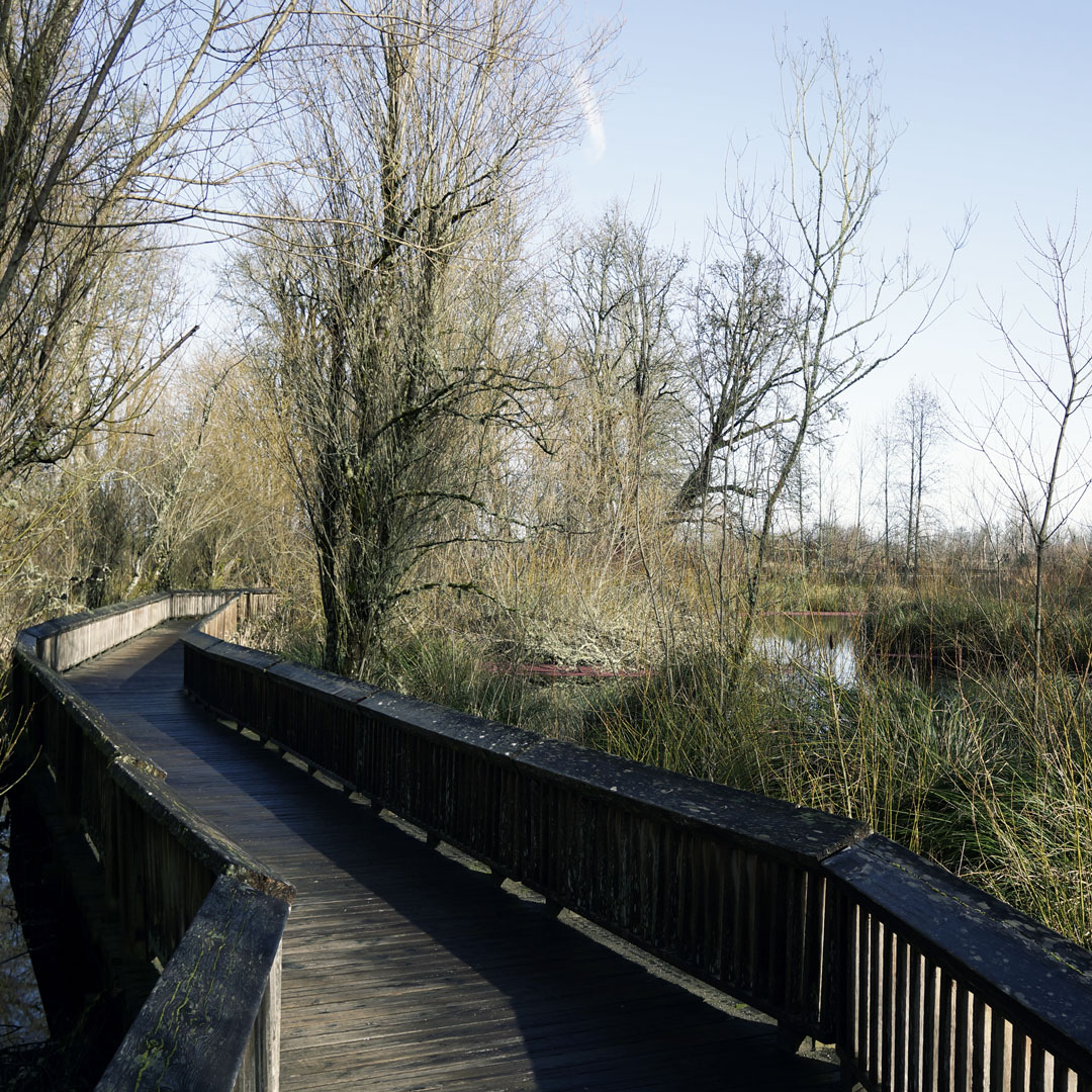 boardwalk trail at Nisqually Estuary