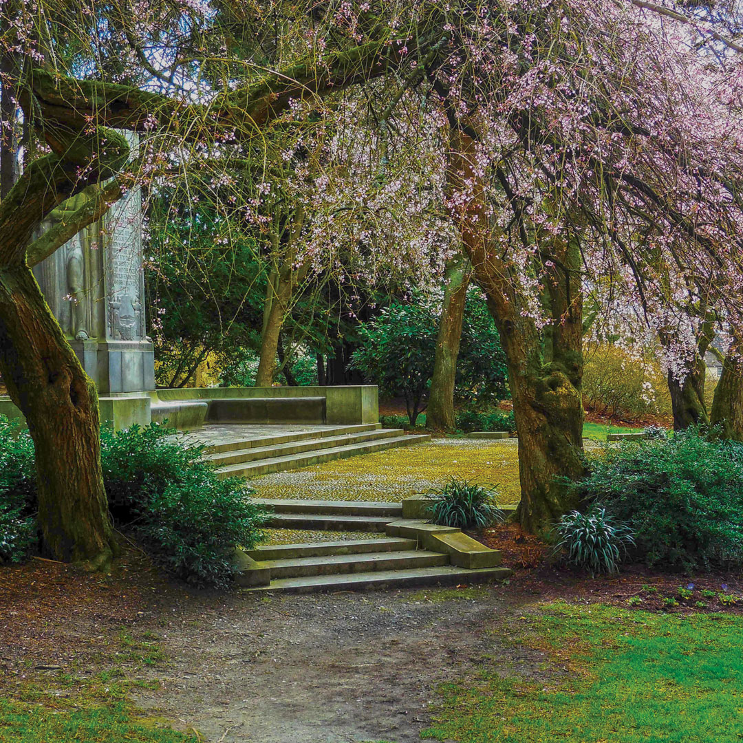 flowering tree framing steps in Seattles Volunteer Park