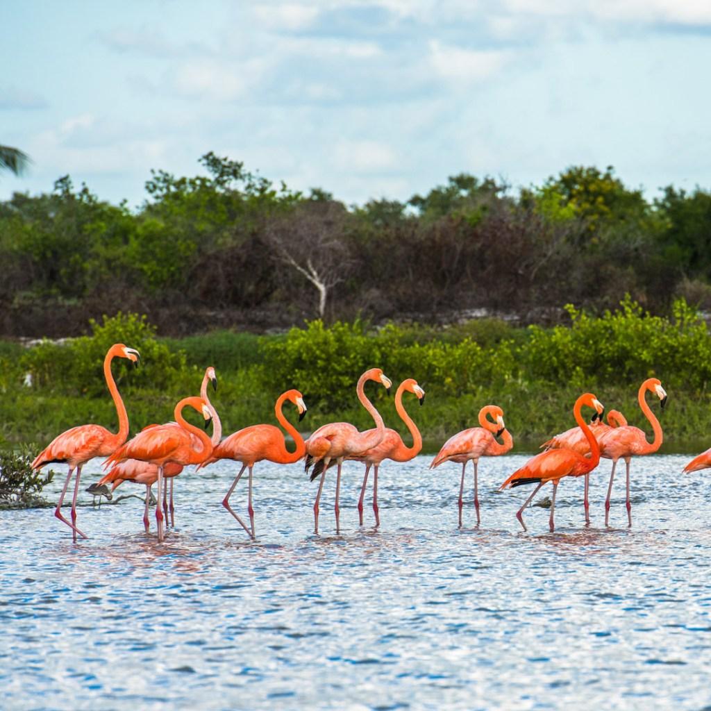 flamingoes standing in water
