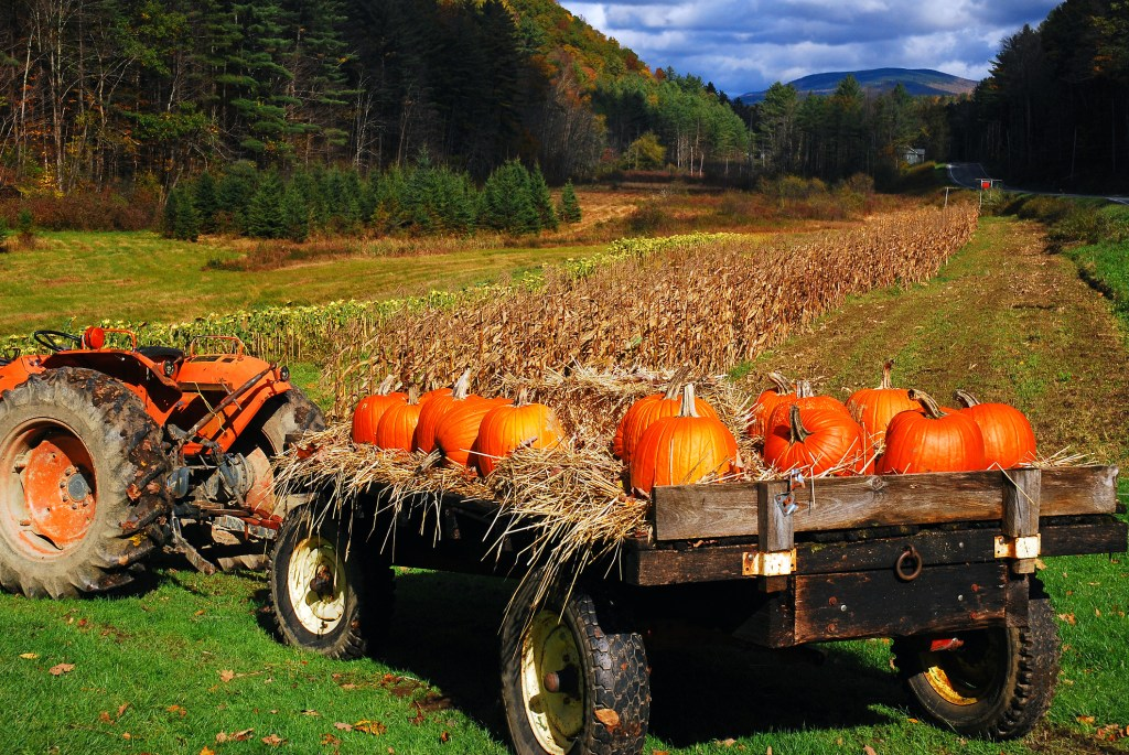 Pumpkins and hay are placed on a flatbed truck at a roadside farm in New England
