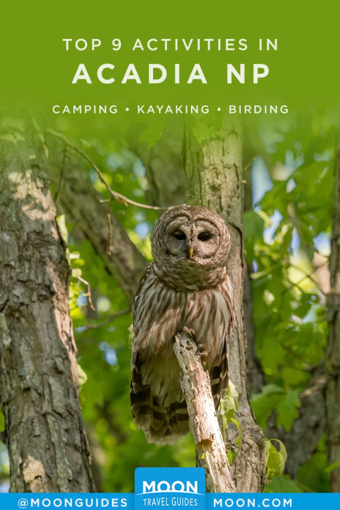 Owl sitting in tree. Pinterest graphic.