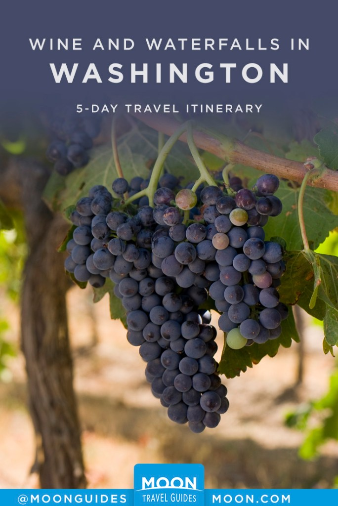 Purple grapes hanging on a vine. Pinterest graphic.