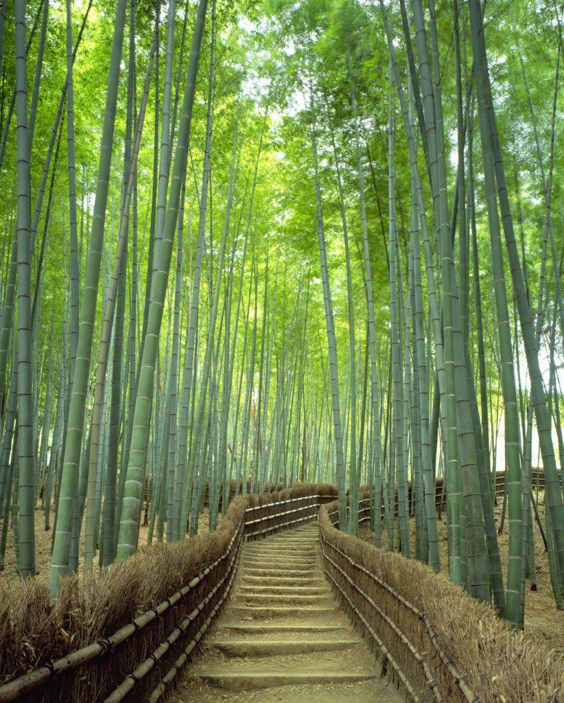 Wander Arashiyama's bamboo grove