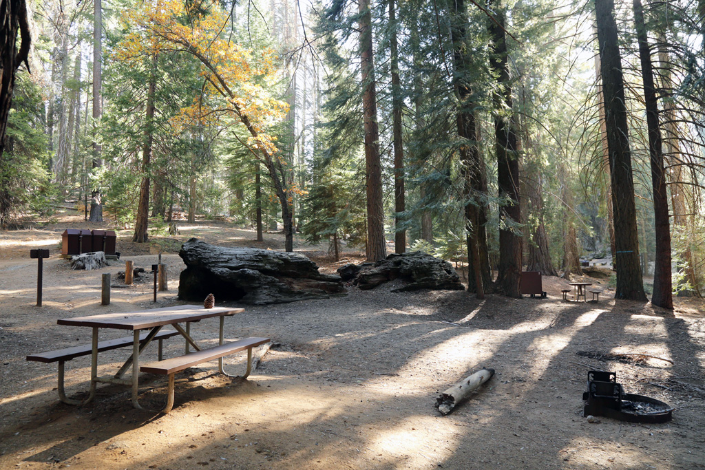 flat campground with fallen log in Sequoia National Park