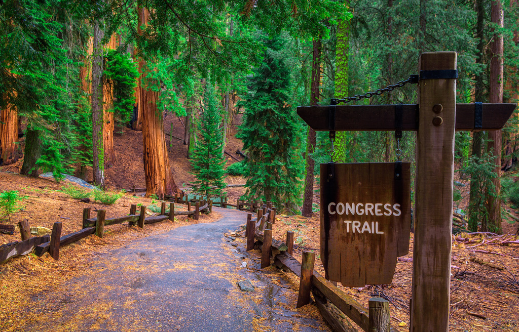 flat trail through sequoia trees with a sign that says Congress Trail