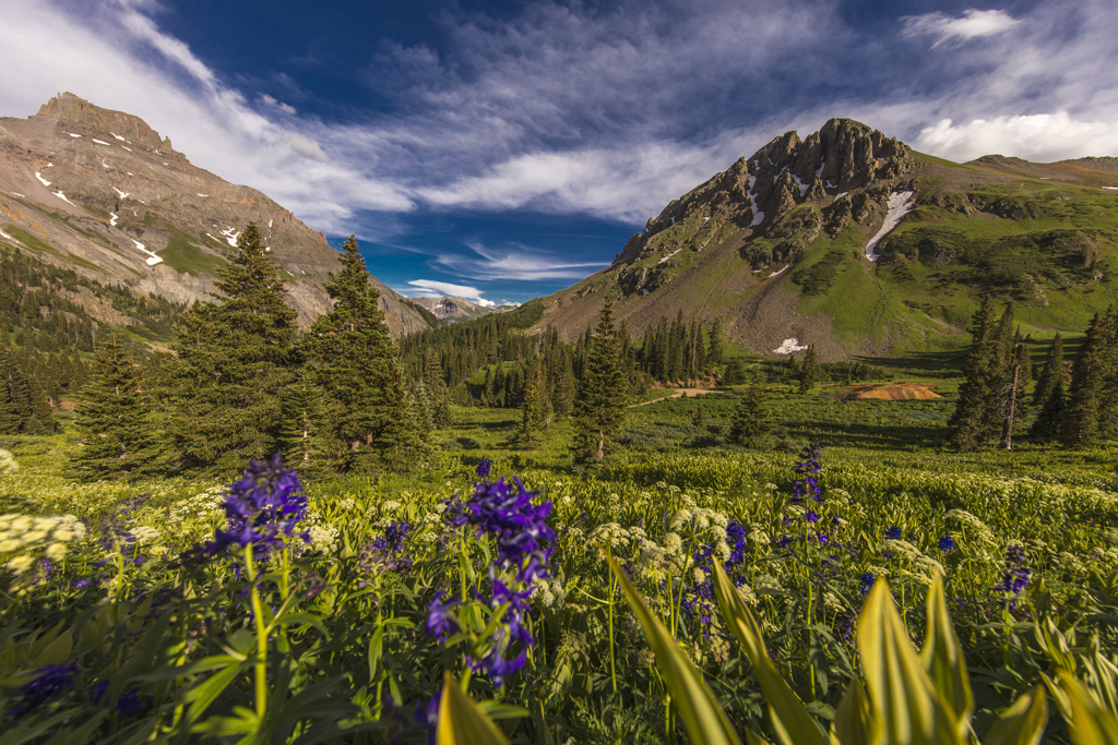 Scenic beauty in summer spring of wildflowers and mountains, in Ouray Colorado
