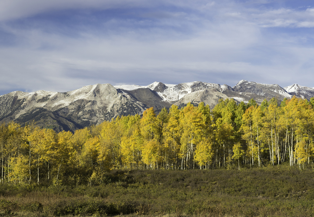 Golden aspen and high country snow of early autumn in ruby mountain.