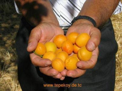 TEPEKOY RESIMLERI (36)