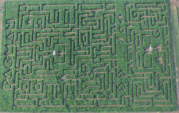 Pac-Man corn maze!