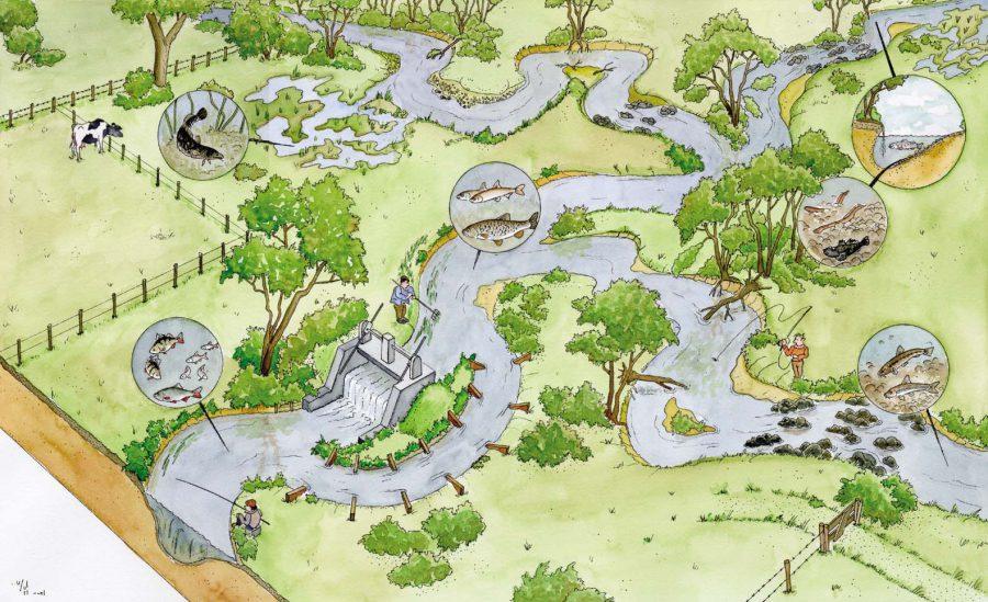M:\bestanden\Advisering\Lopende Projecten\AV-zoet-projecten\AV2014-008 Zeeforel Lauwersmeer\tekeningen Ed vd Kerff\tek. beek goed copy.jpg