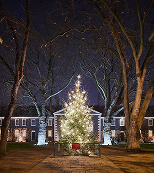 The Geffrye Museum Christmas tree. Photograph: Hannah Taylor