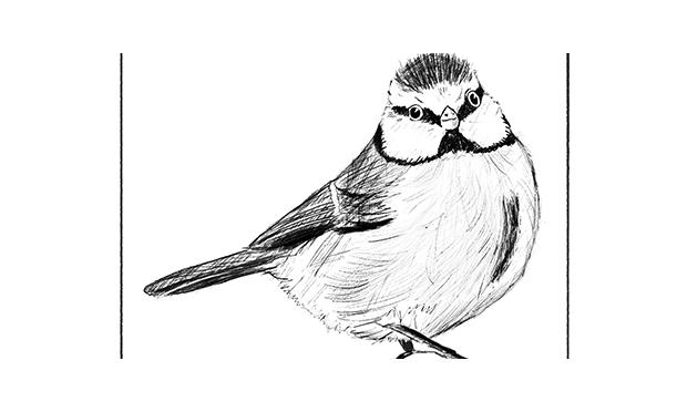 Titbits bird