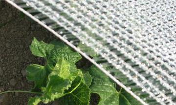 voile protection anti-insecte, insecte, chenille, mouche de la carotte