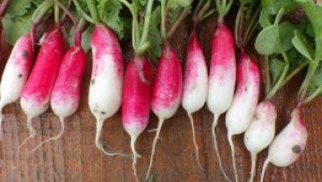 variétés anciennes, variétés population, semence paysanne, plants bio, brest
