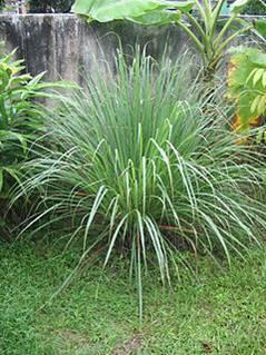 http://4.bp.blogspot.com/--DVs8JN27ug/UMaowsu_uTI/AAAAAAAAARw/SnwE3C7nUdE/s1600/esencias+5.jpg