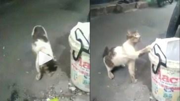 Video kucing kelaparan sedang mengais makanan di tong sampah ini viral, wajah lucunya berubah menyedihkan