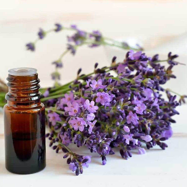 CO2 extraction lavender essential oils