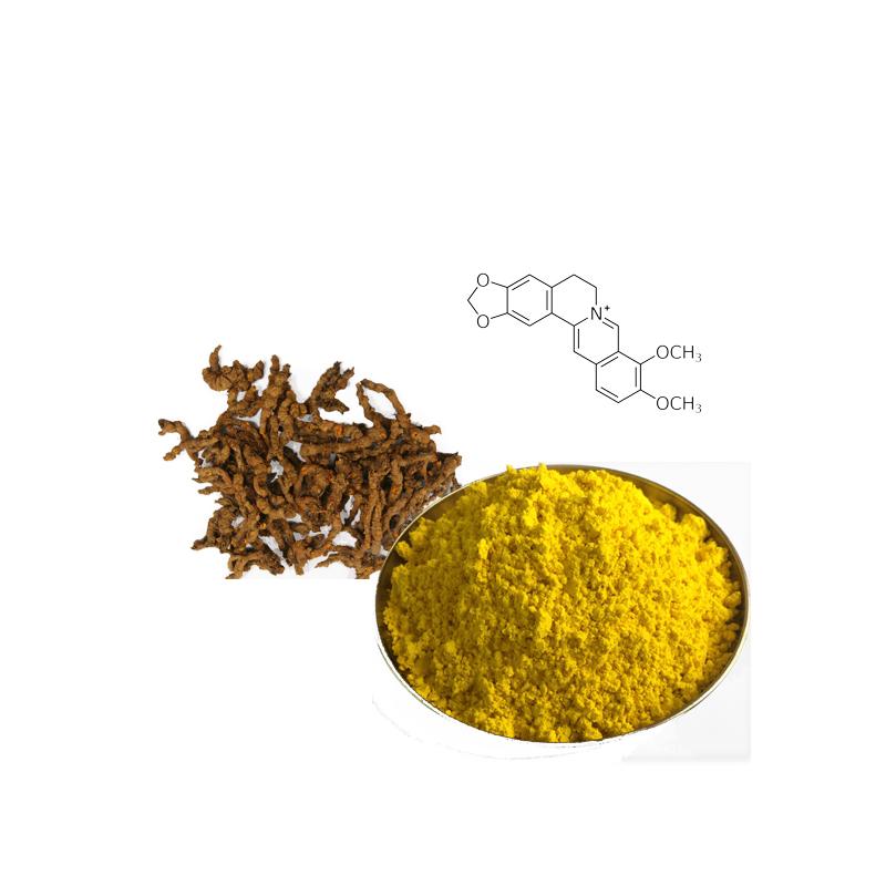Rhizoma Coptidis extract alkaloids