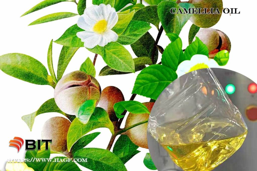 supercritical co2 extraction of Camellia oil
