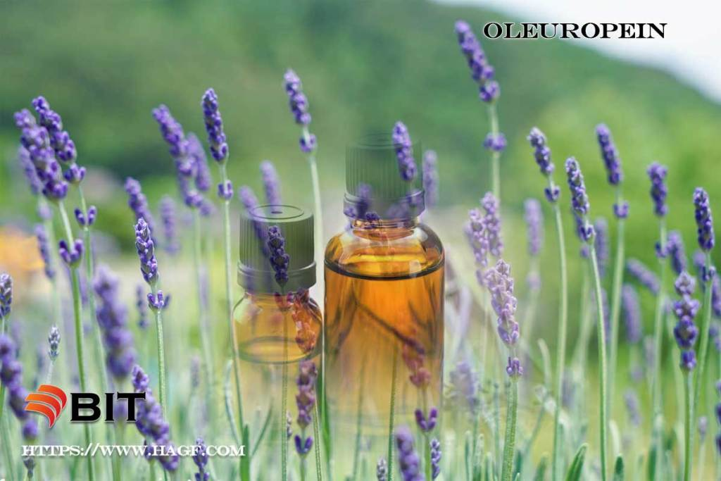 Supercritical CO2 Extraction of lavender essential oil