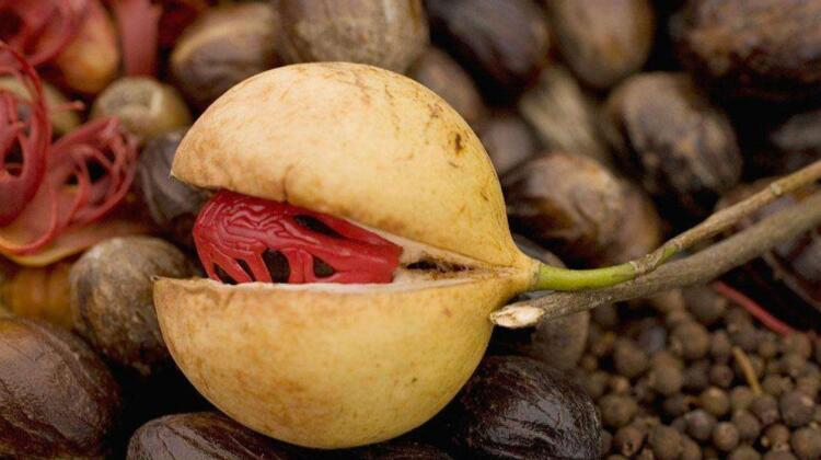 nutmeg oil extracted by supercritical CO2