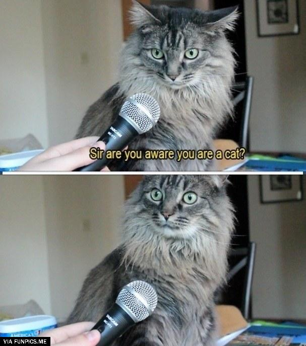 Are you aware that you are a cat