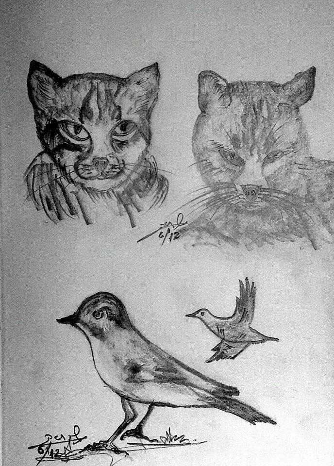 bird+cat+drawing