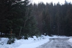 Mosquito Lake Road forested building lot