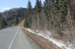 27 Mile Haines Highway – Forested parcel